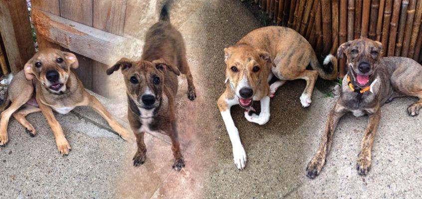 Delhi Puppies #4