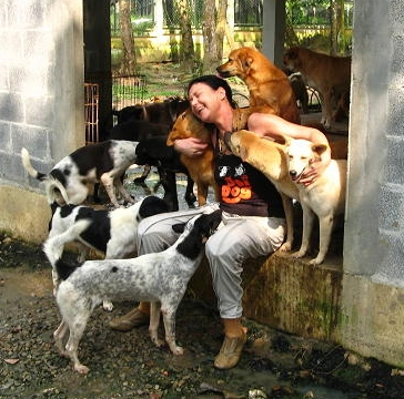 Soi Dog Foundation Can You Help For One Day