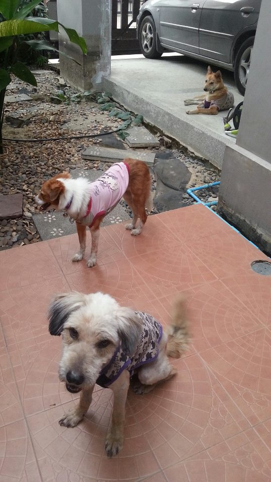 ...until these lucky dogs are ready to head into foster placement where they are loved and cared for...