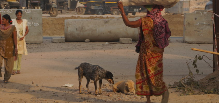 Hope for a better future – India's street dogs