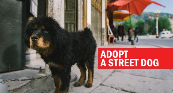 Adopt a street dog