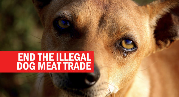 Help end the dog meat trade