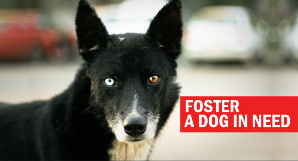 Foster a dog in need