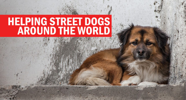 Helping street dogs around the world