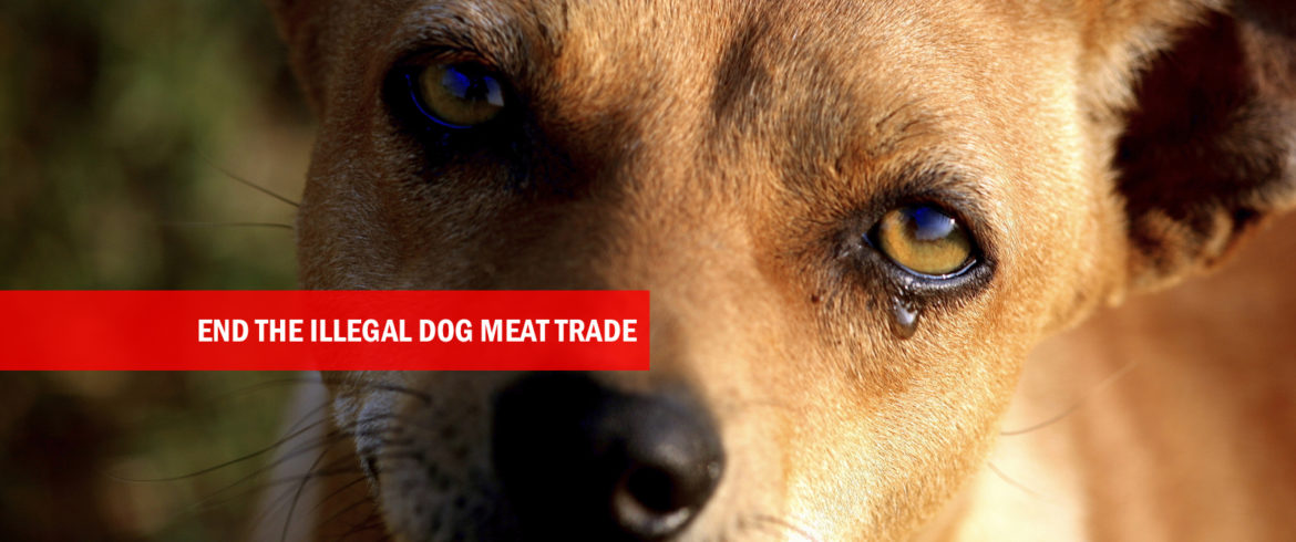 Help end the illegal dog meat trade
