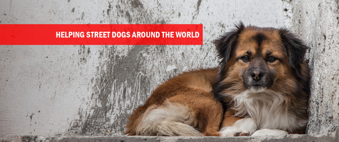 Helping street dogs around the world.