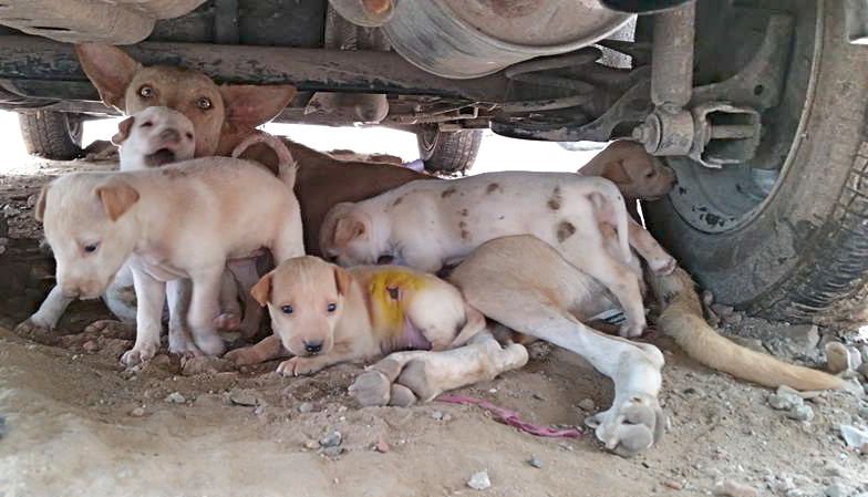 The Puppies of Jor Bagh Lane