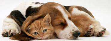 Having trouble integrating your new dog with your cat?
