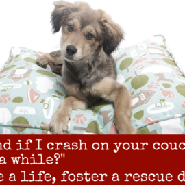 Fosters SAVE LIVES.  ISDF desperately needs foster homes.
