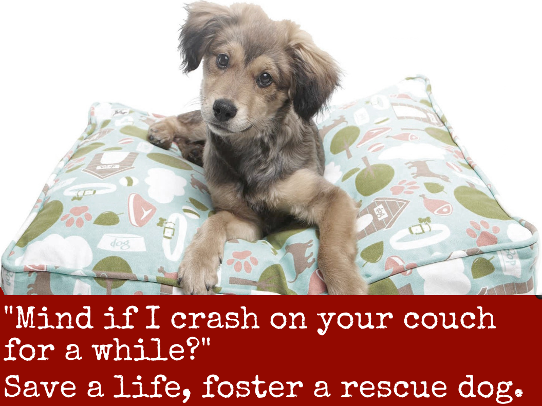 Foster Dogs Adopt