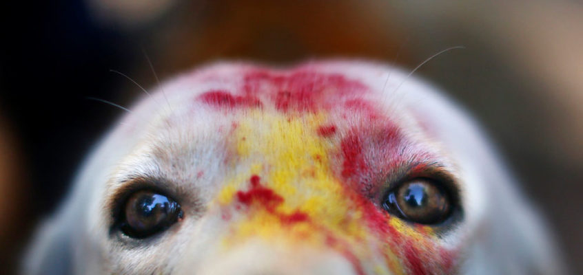 China take note!  Nepal's festival to honor the sacredness of the dogs.