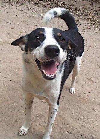 Dog Adoption Mchenry Il