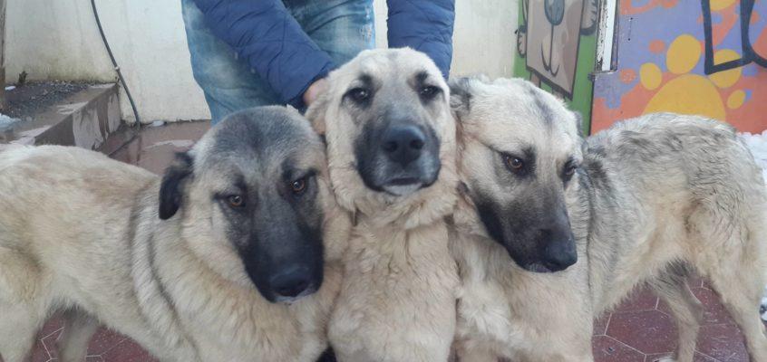 Anne & Her Puppies – Istanbul, Turkey