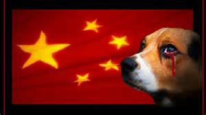 Help put an end to the Yulin Dog Meat Festival!