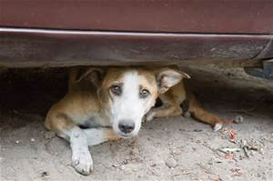 Living With a Street Dog