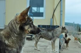 Tragedy in Kosovo  – help stop the senseless killing of street dogs!