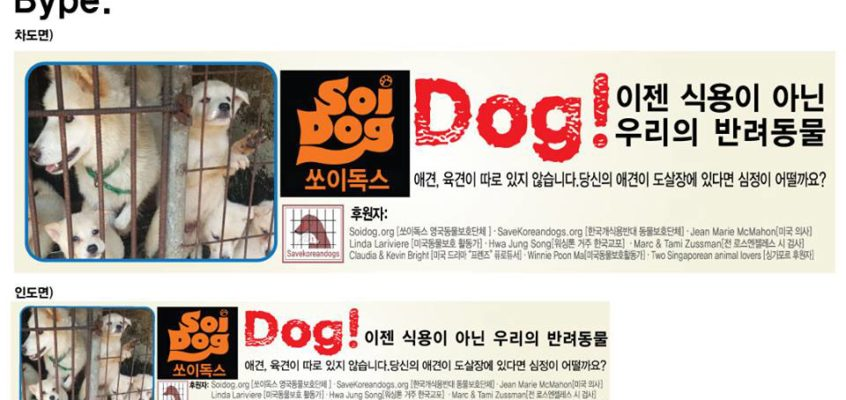 Soi Dog comes to S. Korea to help end the dog meat trade!