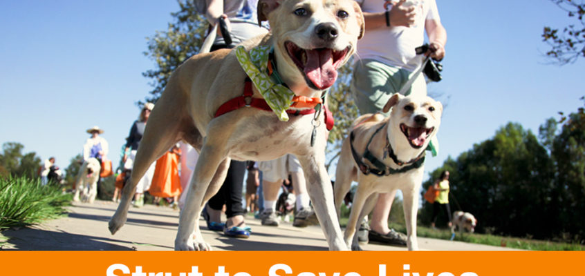 "Team ""Street Dog Strutters""…. Strutting to save the lives of street dogs!"