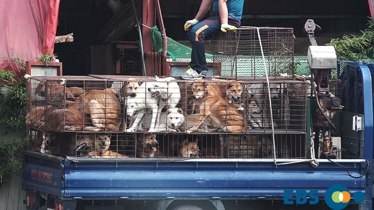 The horrible reality of dog meat farms that you don't know.