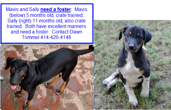 Mavis and Sally need a foster