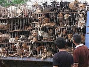 An update on the Dog Meat Trade in SE Asia by Soi Dog Foundation