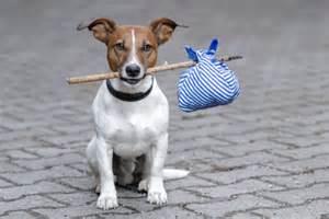 Doggy Don't Run!