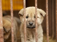 Progress in the fight against the S Korean dog meat trade but still a long way to go