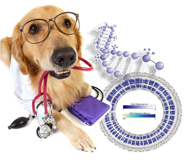 Have you ever thought about DNA testing your dog?