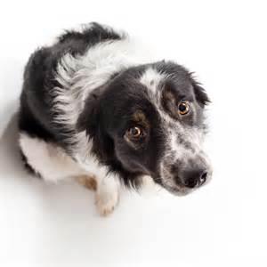 Ever wonder how to best calm a nervous dog?