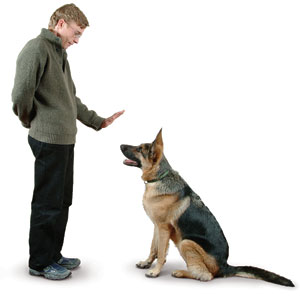 How to Find a Qualified Dog Trainer