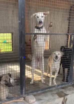NEWS & UPDATES – International Street Dog Foundation