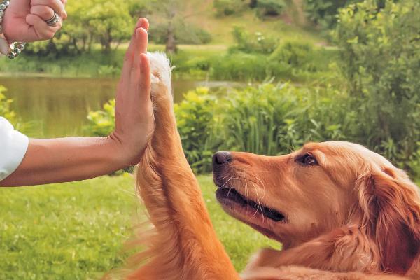 Training International Street Dog Foundation
